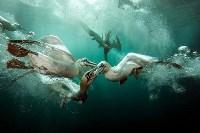 Звание «Британского подводного фотографа 2015 года» получил Мэтт Доггет за снимок «Празднество бакланов»., Фото: 1