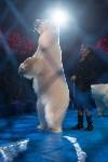 Тульский цирк, Фото: 90