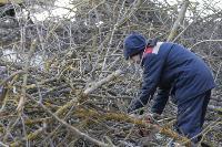 Кронирование деревьев в Туле: что можно, а чего нельзя?, Фото: 13