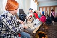 Выставка собак в Туле, 29.11.2015, Фото: 63