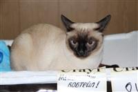 В Туле прошла международная выставка кошек, Фото: 2