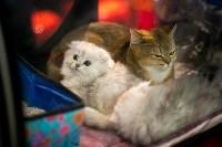 Пряничные кошки, Фото: 17