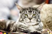 Выставка кошек. 4 и 5 апреля 2015 года в ГКЗ., Фото: 56