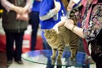 Выставка кошек. 4 и 5 апреля 2015 года в ГКЗ., Фото: 31