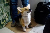 Выставка собак в Туле, Фото: 16