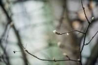 Посадка деревьев во дворе на ул. Максимовского, 23, Фото: 39