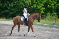 В Ясной поляне стартовал турнир по конному спорту, Фото: 138