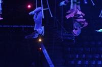 Aqua Show в Тульском цирке, Фото: 4