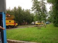 Упавшее дерево в Криволучье, Фото: 8