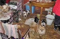 Похищенные собаки, Фото: 1
