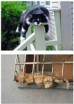 Коты спят где хотят, Фото: 2