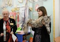 Выставка кошек в Туле, Фото: 55