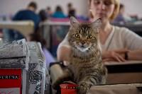 Выставка кошек в ГКЗ. 26 марта 2016 года, Фото: 68