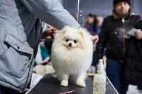 Выставка собак в Туле, Фото: 20