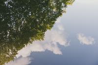 Летний день в богородицком парке, Фото: 19