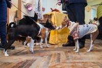 Всероссийская выставка собак 2017, Фото: 34