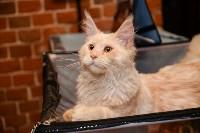 Выставка кошек в Искре, Фото: 81