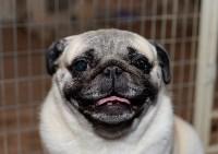 Выставка собак DogLand, Фото: 19
