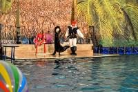Шоу карибских дельфинов, Фото: 12