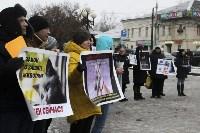 Более 8000 туляков требуют запретить убийство бездомных животных, Фото: 5