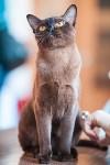 Международная выставка кошек. 16-17 апреля 2016 года, Фото: 86