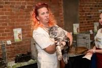 Выставка кошек в Искре, Фото: 53