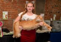 Выставка кошек в Искре, Фото: 59
