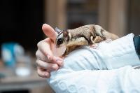 Экзотические животные в квартире, Фото: 22