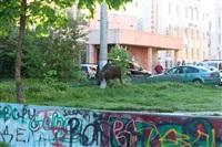 Лось во дворе дома №45 по ул. Плеханова, Фото: 13