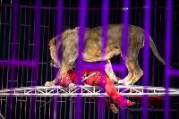 Шоу фонтанов «13 месяцев»: успей увидеть уникальную программу в Тульском цирке, Фото: 207