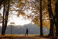 Центральный парк, утро, осень, Фото: 31