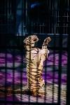 Шоу Lovero в тульском цирке, Фото: 36