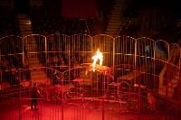В Тульском цирке родился тигролев, Фото: 18