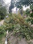 Читатель о вырубке деревьев на ул. Революции: «Была красивая зеленая улица, а теперь…», Фото: 11