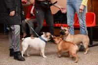 """Выставки собак в ДК """"Косогорец"""", Фото: 61"""