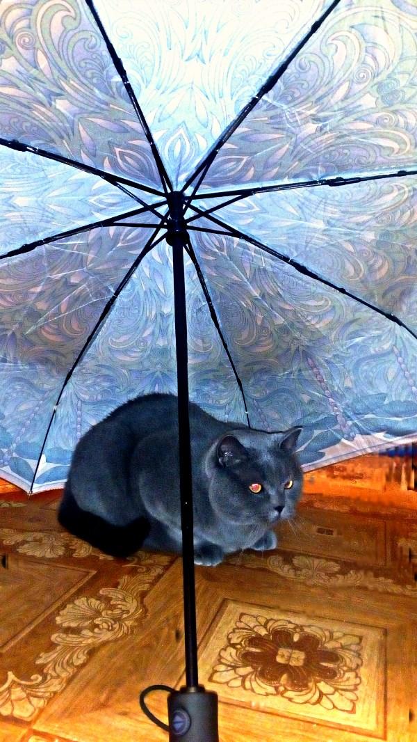 Не осень,но под зонтом...