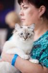 """Выставка """"Пряничные кошки"""". 15-16 августа 2015 года., Фото: 71"""