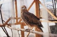 Куда свозить детей посмотреть на животных в 100 км от Тулы: обзор, Фото: 10