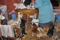 Похищенные собаки, Фото: 15