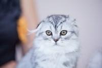 """Выставка """"Пряничные кошки"""". 15-16 августа 2015 года., Фото: 112"""