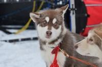 Праздник северных собак на Куликовом поле , Фото: 5