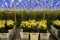 Миллион разных роз: как устроена цветочная теплица, Фото: 12