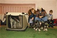 В Туле прошла всероссийская выставка собак, Фото: 46