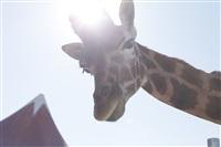 Цирк огромных зверей. Тула, Осиновая гора, 1, Фото: 6