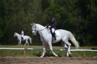 В Ясной поляне стартовал турнир по конному спорту, Фото: 2