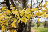 Золотая осень в Туле-2019, Фото: 9