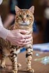 Международная выставка кошек. 16-17 апреля 2016 года, Фото: 49