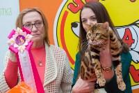 Выставка кошек в Туле, Фото: 64