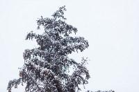 Тула после снегопада. 23.12.2014, Фото: 4