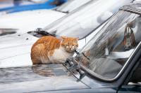 Тульские котики, Фото: 52